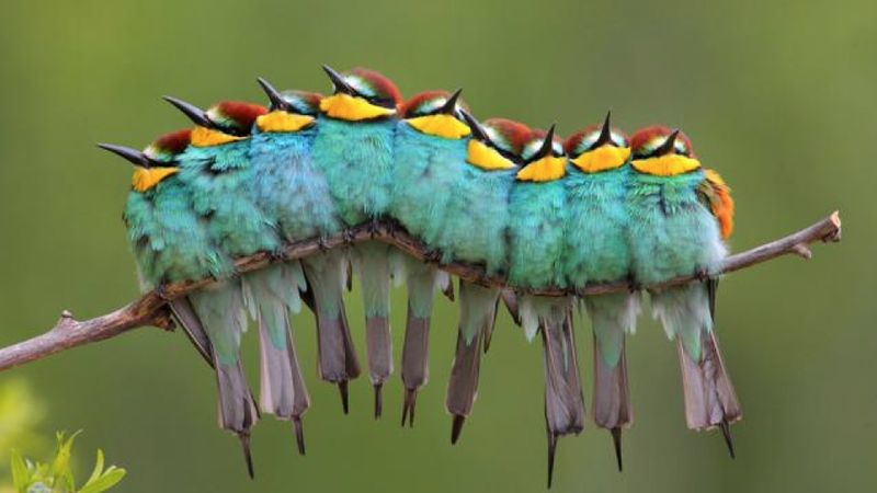 Caterpillar_Birds